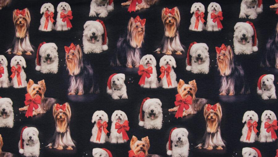 Suņi ar bantēm